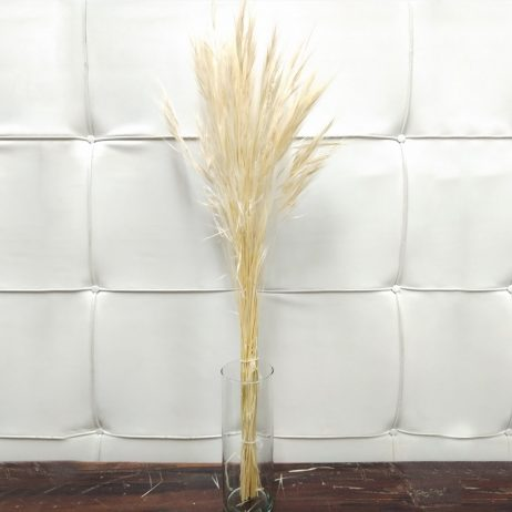 Dried Flower - Erba (Per Bundle) 2210