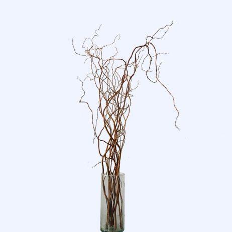 Fresh Flowers - Cornus 170cm (Per Stem)