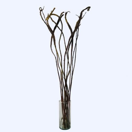 Fresh Flowers - Saliz 110cm (Per Stem)