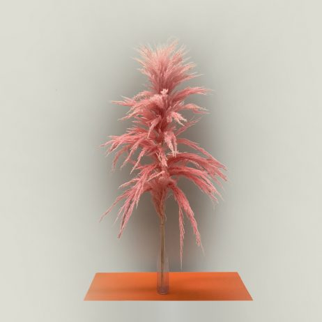 Dried Flower - Pampas Light Pink Super Extra (140 cm)
